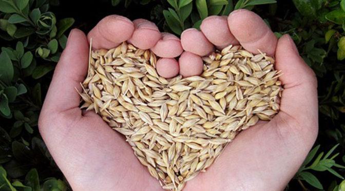 corso tecnico agricoltura biologica